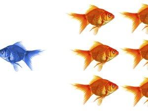 goldfish 121029281