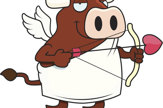 cow bull cupid thinkstock