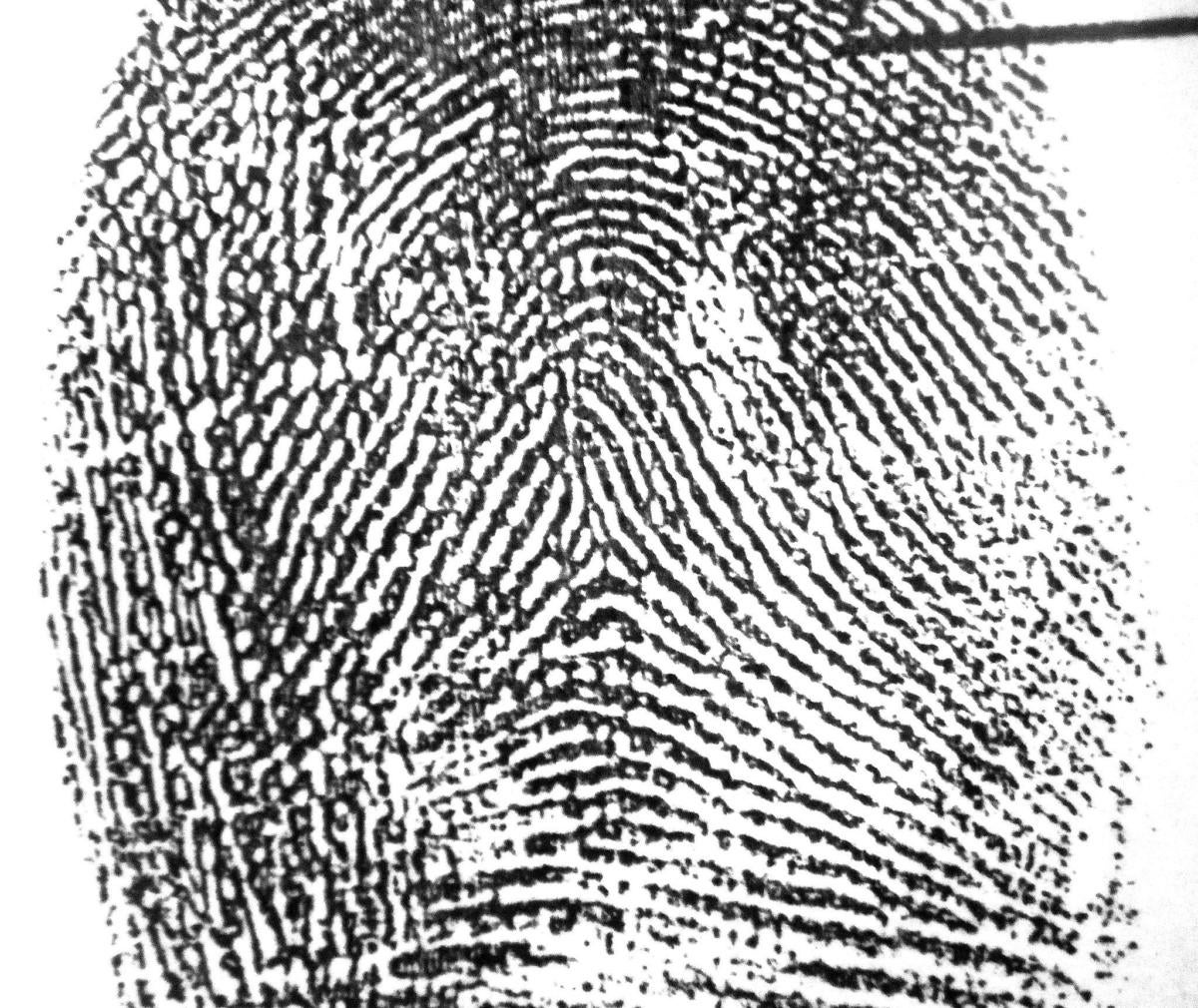 tented arch in a left index fingerprint